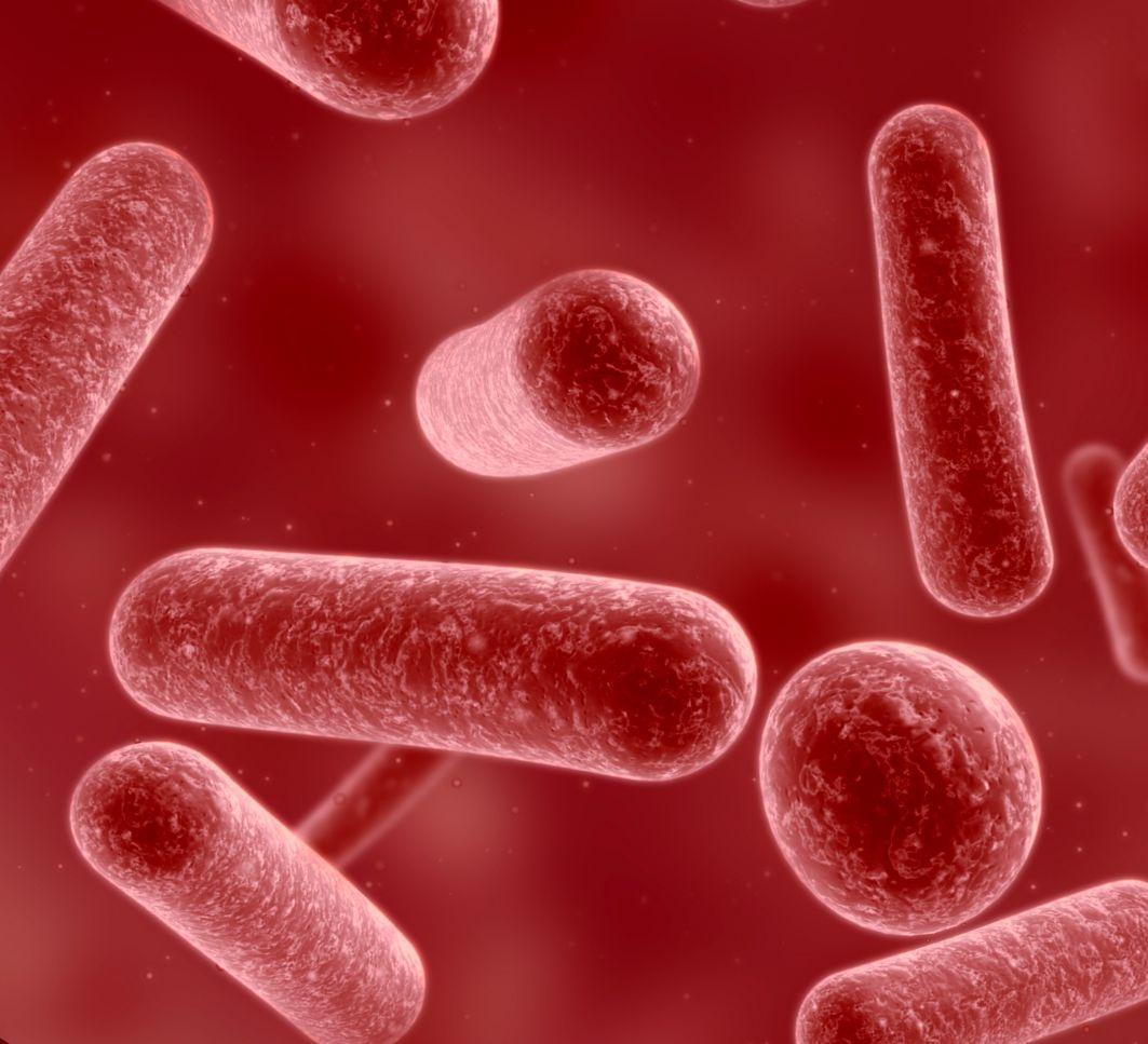 бифидобактерии с пробиотиками решают проблемы с пищеварением