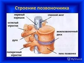 ортопед 5